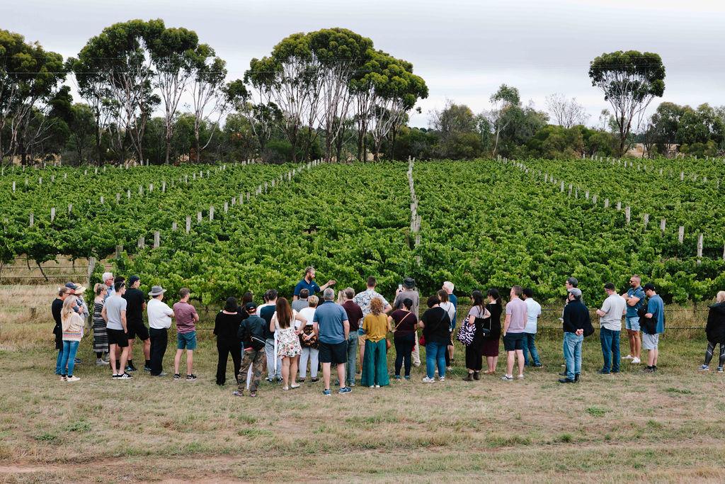 Rent a Vine workshop 2