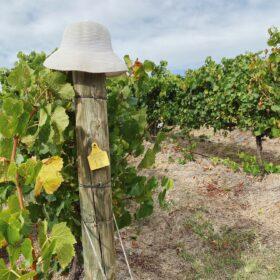 rent a vine begins